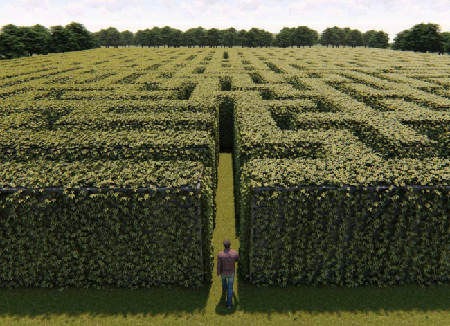 Person in front of maze